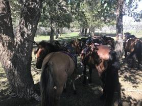 Tour a cheval en groupe en Arkhangai en Mongolie