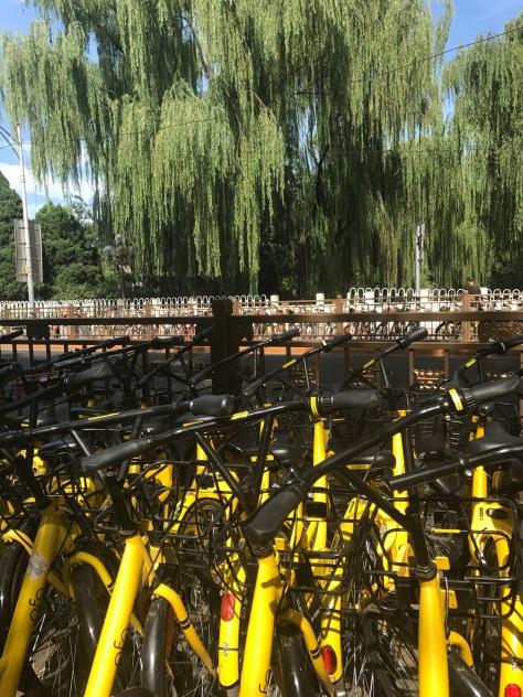 Balade a vélos dans un parc a Pékin