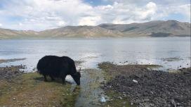 Le lac blanc entouré du volcan en Mongolie