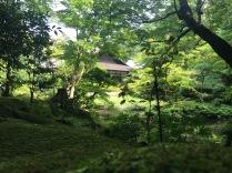 Un jardin japonais du temple